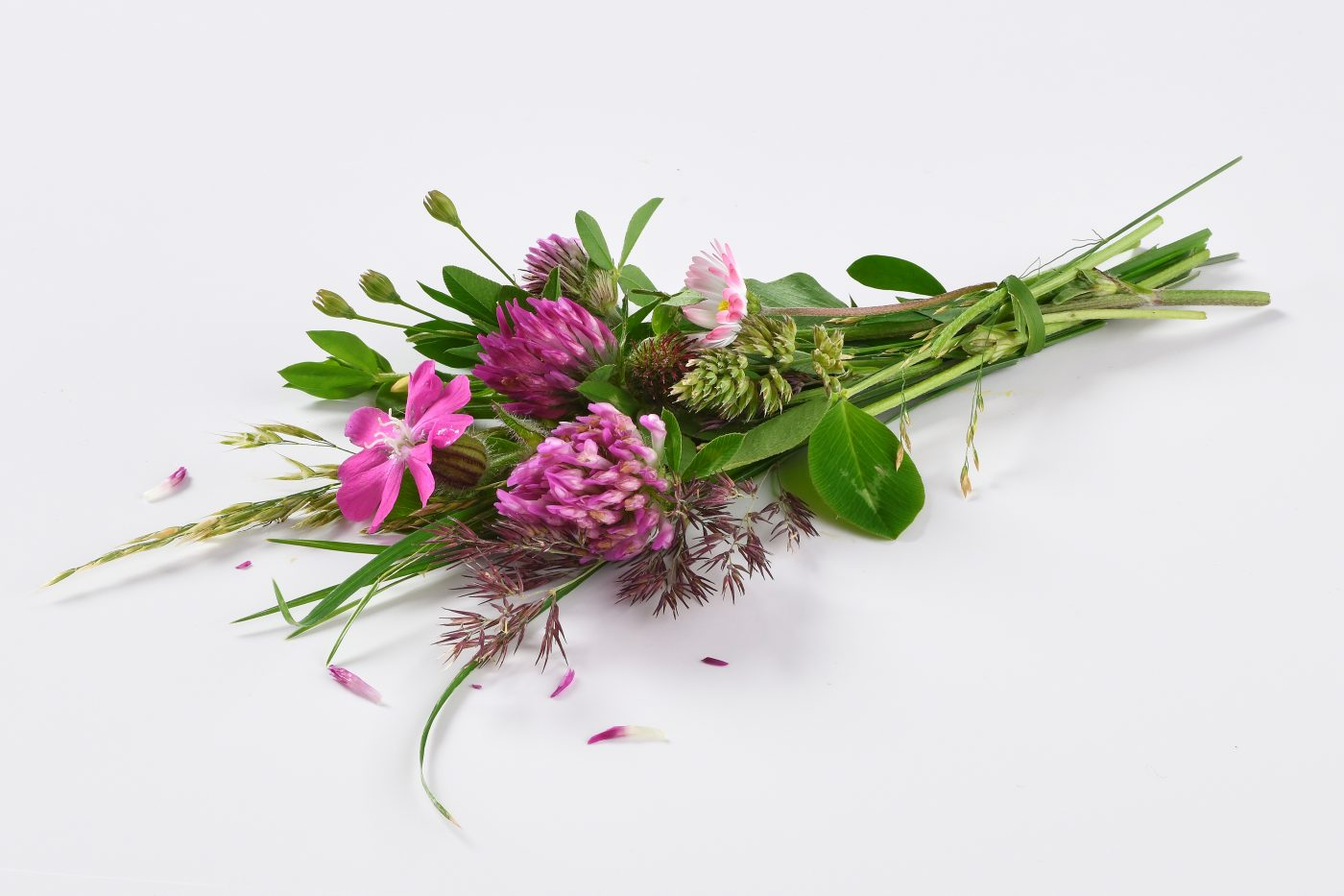 a bunch of pink meadow flowers for cheese production are lying on a white background