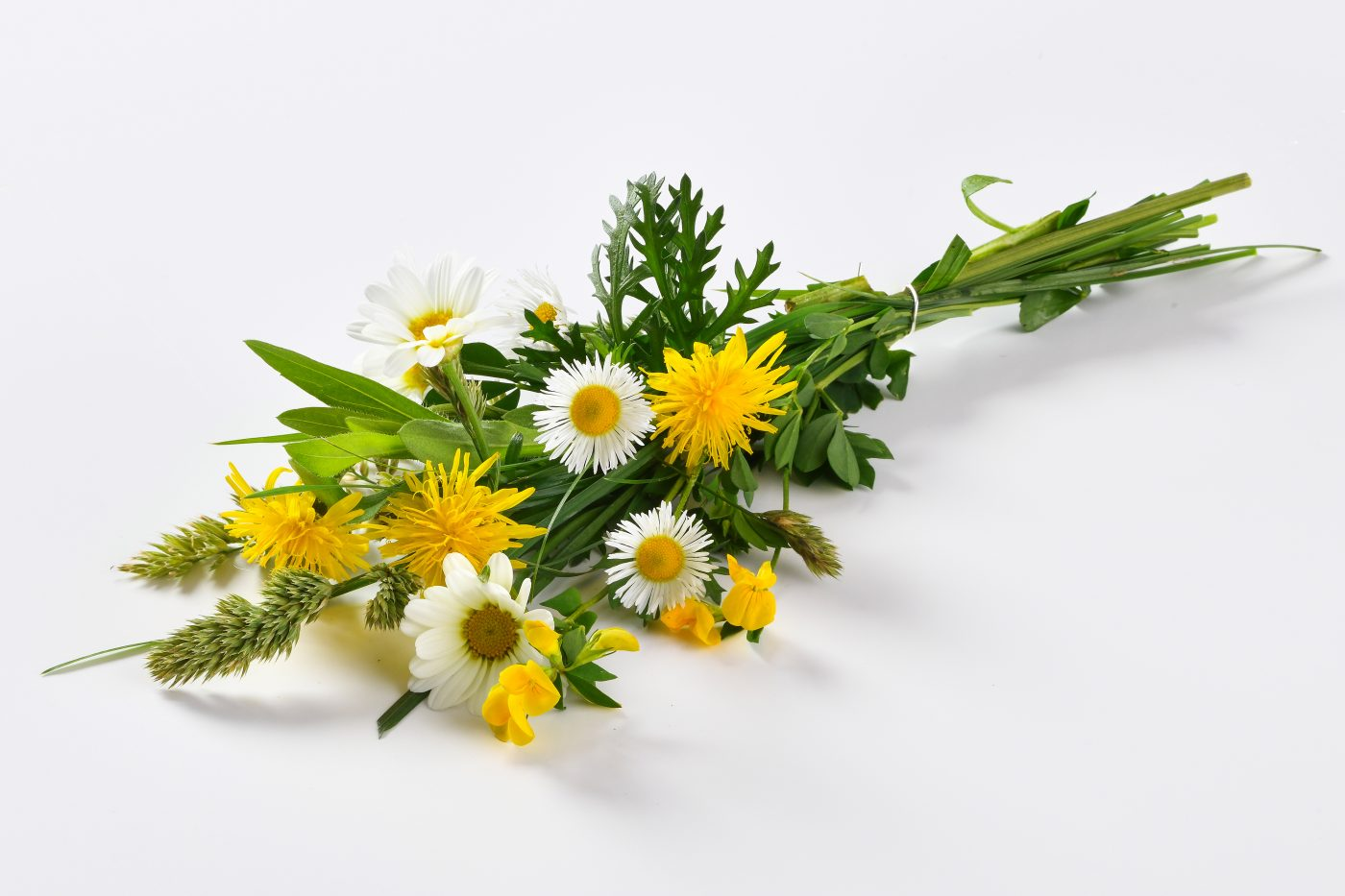 a bunch of yellow meadow flowers for cheese production are lying on a white background