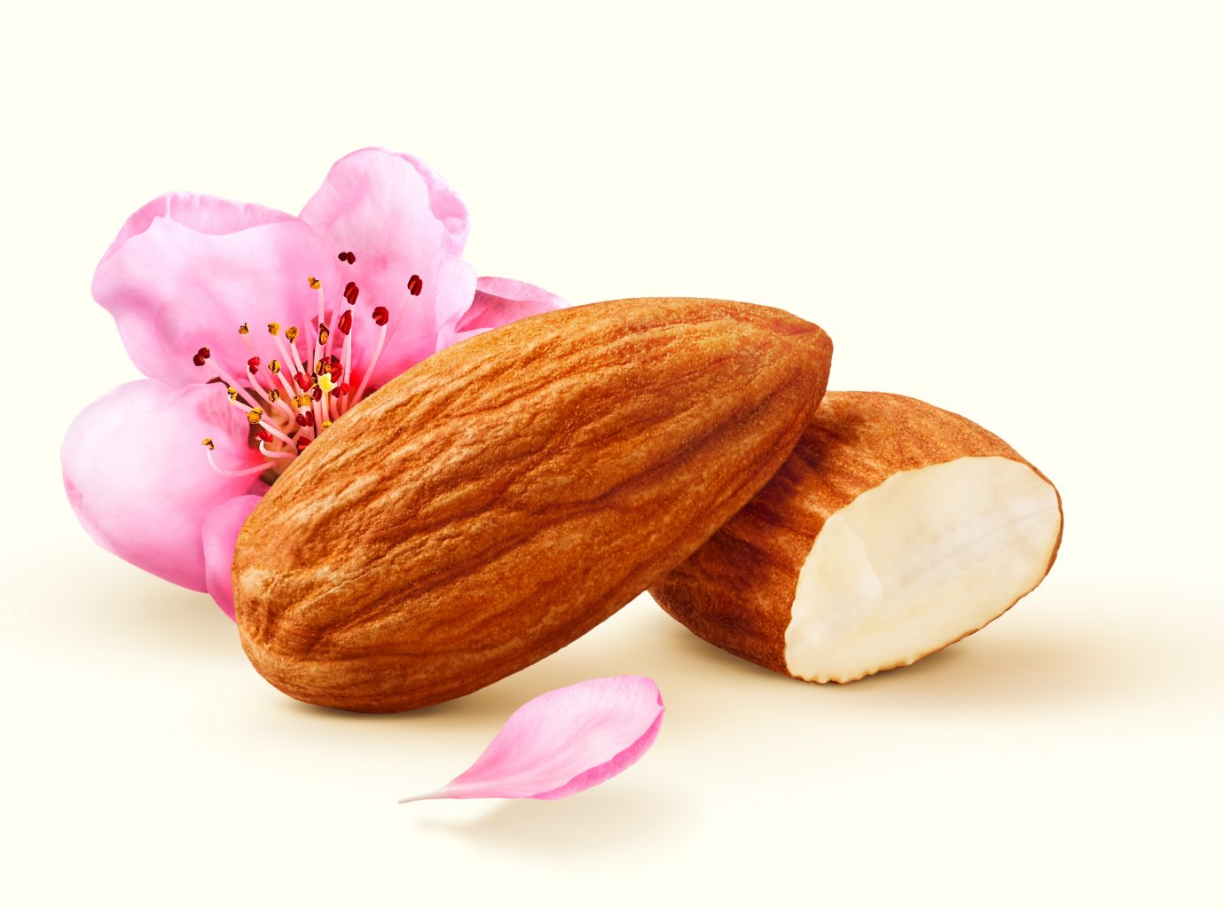 Pair of almonds with flower as decoration for the packaging photography. confectionery