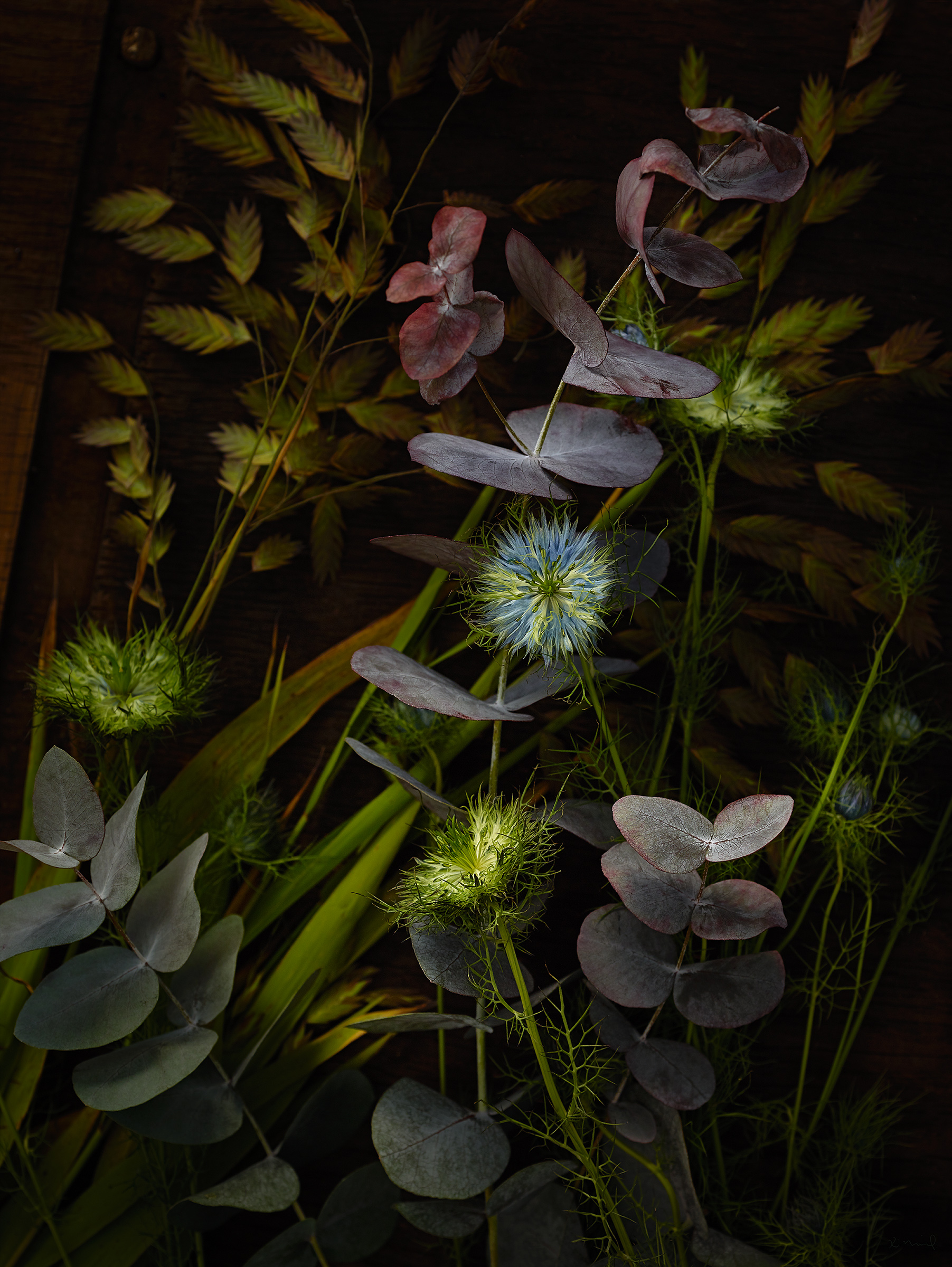 a still life photography from several flowers